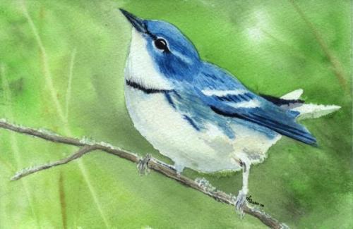 cerulean-warbler-10