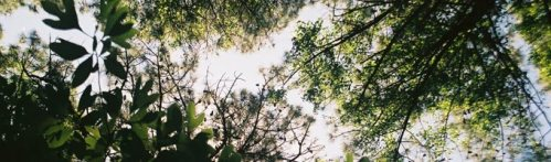 tree_canopy_top