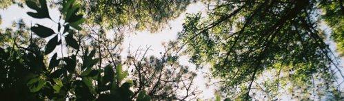 tree_canopy_top
