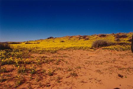 golden-carpet-flora