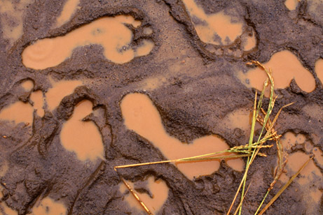 Photo Credit - From theresialientearth.com: Footprints filled with muddy water in a rice field, phto by Robb Kendrick/Aurora/Getty Images