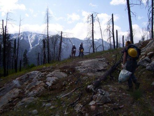 On Spike -WCC Crew, Kuprina removal. Lake Chelan, Washington, 2008